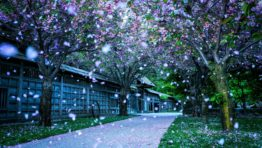 4487929 Spring Nature Wallpapers