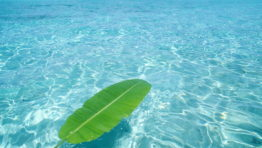Green Palm Leaf In The Beautiful Blue Ocean Water