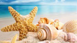 Beach Summer Seashells Sands Shell Ocean Beautiful Wallpaper Hd