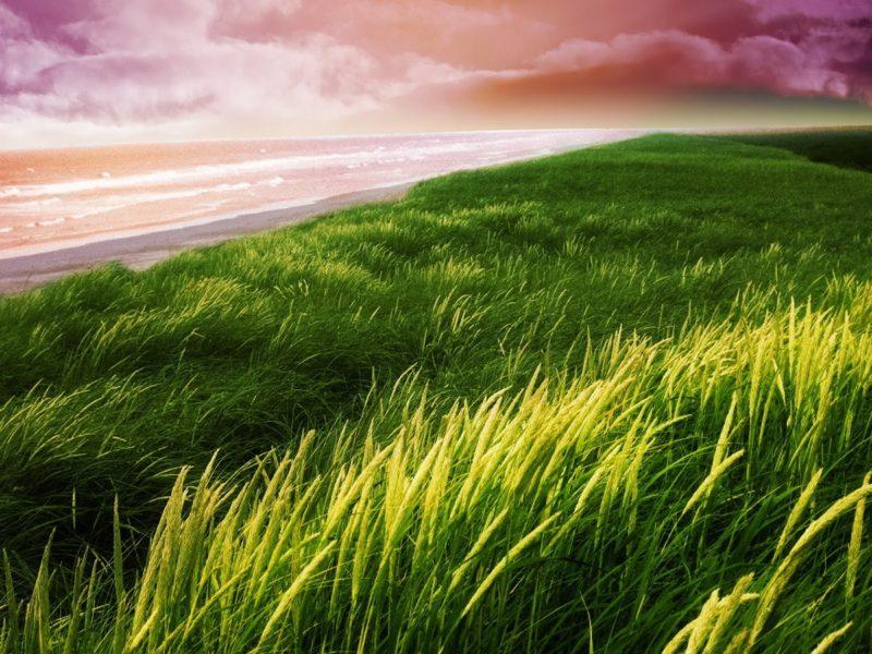 Grass Nature Hd Walpaper