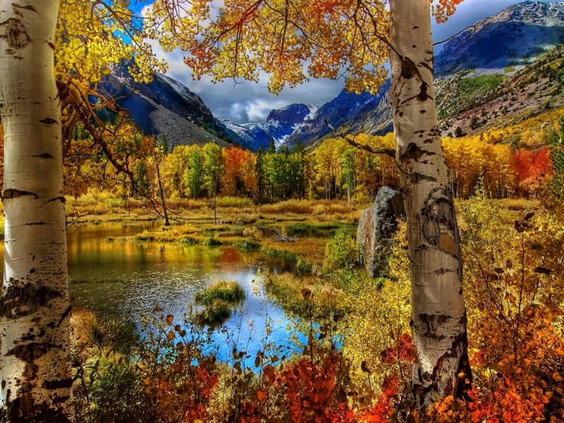 Amazing Nature Fall Hd Wallpaper Download
