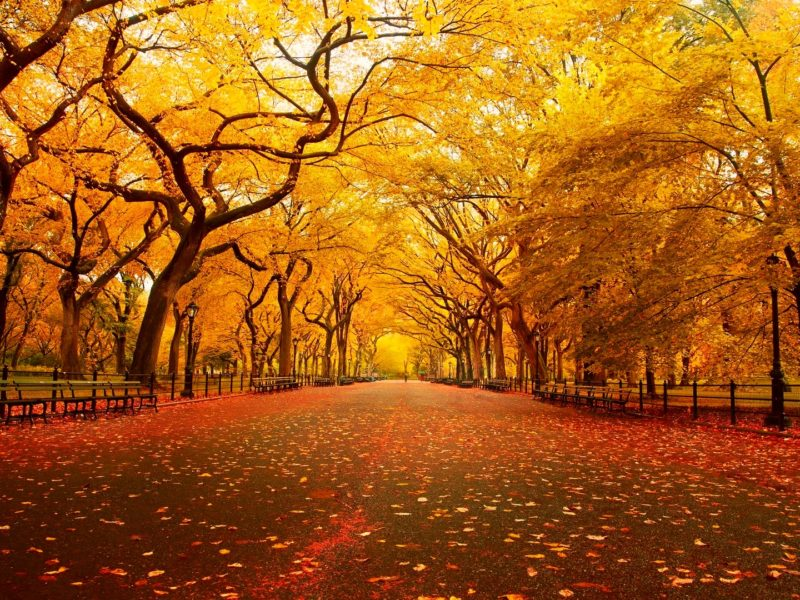Fall Wallpaper 4k Iphone Pc Android Mac Download