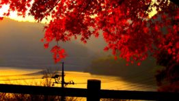 Fall Wallpaper Red Leaves Hd Download For Mac Pc Iphone Android