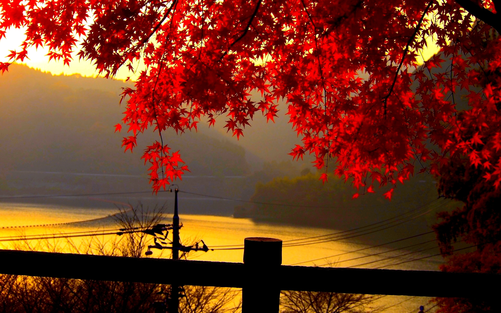 Fall Wallpaper Red Leaves Hd Download For Mac Pc Iphone