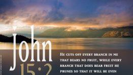 John 15 2 Bible Verse Wallpaper Hd
