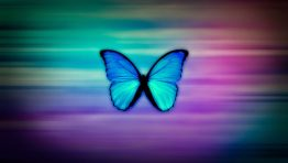 Blue Butterfly Artistic Wallpaper Hd
