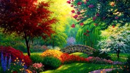 Colorful Trees Nature Wallpaper Hd