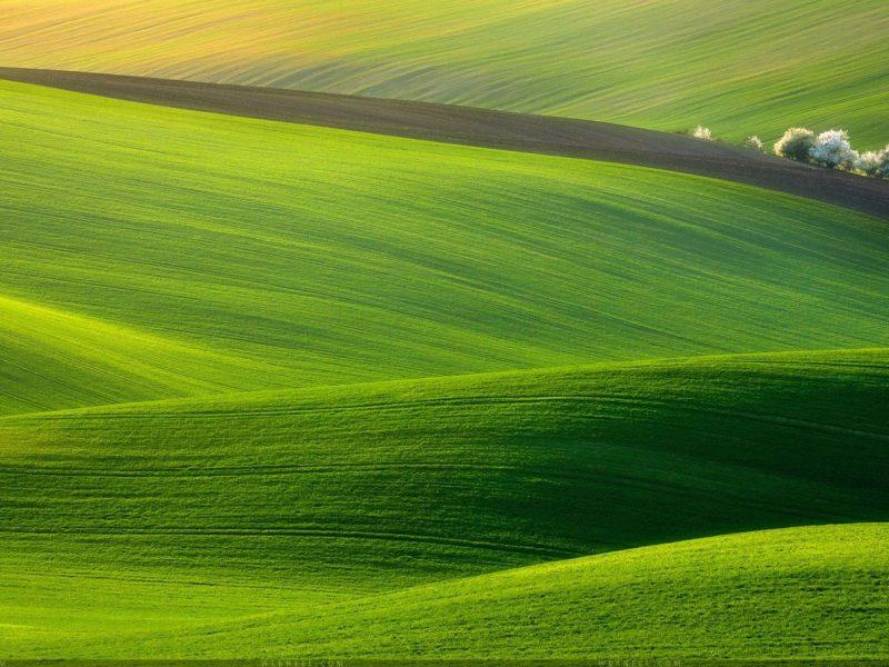Prairie Grass Nature Wallpaper Hd