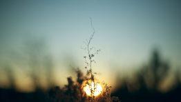 Shadow Flower Sunsetartistic Wallpaper Hd