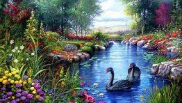 Swan Lake Flowers Nature Wallpaper Hd