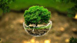 Tree Globe Nature Wallpaper Hd
