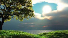 Tree View Lake Nature Wallpaper Hd