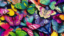Bed Of Butterflies Wallpaper