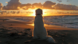 Dog Looking At Beach Sunset Wallpaper
