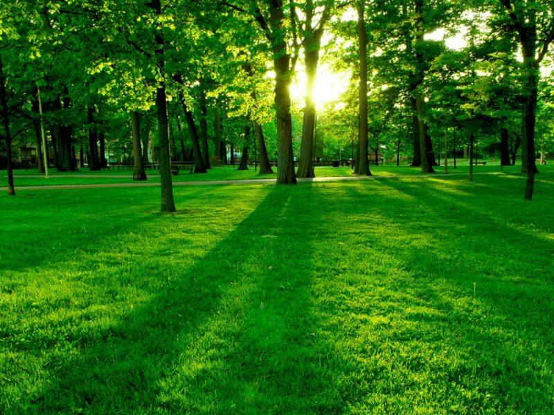 Fields Of Green Wallpaper